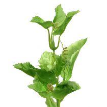Gałązka chmielu 70cm zielona 2szt.