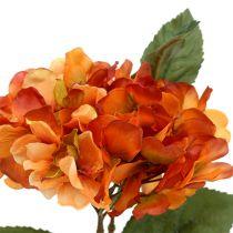 Hortensja pomarańczowa 30cm 3szt.