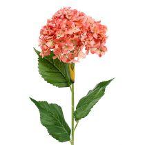 Hortensja różowa 80cm 1szt.