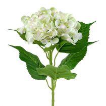 Hortensja biało-zielona 60cm
