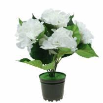 Hortensja w doniczce sztuczna biała 35cm