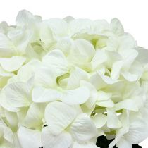 Hortensja Maxi Biała Ø30cm L113cm