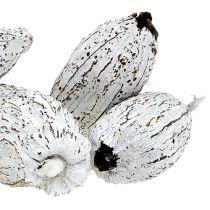 Owoce kakaowca białe myte 15szt.