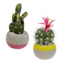 Kaktusy w doniczce mix H13cm 4szt
