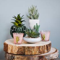 Kaktusy w doniczce Ø12cm 1szt.