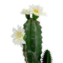 Kaktus w doniczce z kwiatkiem 21 cm biały