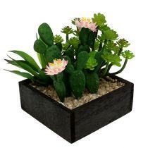 Kaktus z kwiatkiem 14 cm w drewnianym pudełku