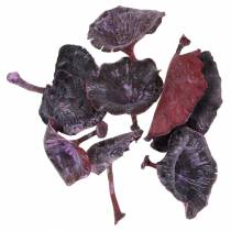 Kalix pieczarka fioletowa, biała płukana 100szt.