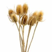 Suszone kwiaty oset Natura 8szt.