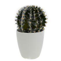 Kaktus w doniczce zielony 14cm