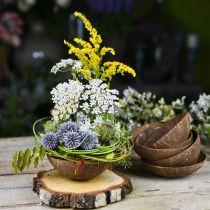 Miska dekoracyjna kokosowa Natura Polerowana 6szt.