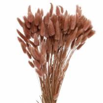 Kwiaciarnia sucha Zając Trawa Lagurus Czerwono-brązowa 100g