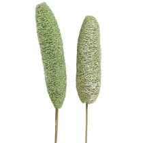 Loofah duża na łodydze zielona 25szt