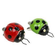 Biedronka z klipsem 4,5 cm czerwona, zielona 6szt