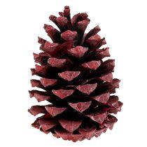 Maritima stożek 10-15cm czerwony szroniony 12szt.