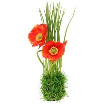 Mak czerwony w trawie 23cm