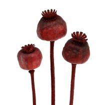 Główki maku barwione na czerwono 100szt