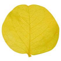 Moneta liście limonki 50gr
