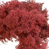 Mech dekoracyjny do rękodzieła Czerwony Naturalny Mech barwiony w woreczku 40g