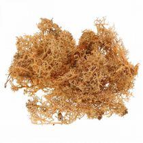 Mech dekoracyjny do rękodzieła kolor pomarańczowy naturalny mech konserwowany 40g