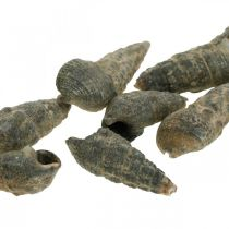 Artykuły naturalne, muszle ślimaków natura 6-10mm, dekoracja morska 1kg