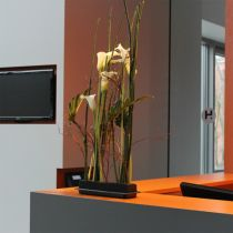 OASIS® Black Table Deco Medi pianka plug-in 4szt.