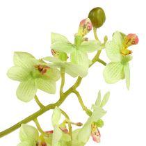 Orchidea 97cm jasnozielona