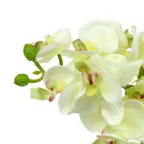 Orchidea jasnozielona 56cm 6szt