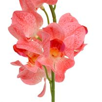 Orchidea Mokara łososiowa 50cm 6szt.