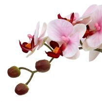 Orchidea różowa w doniczce ceramicznej 31cm