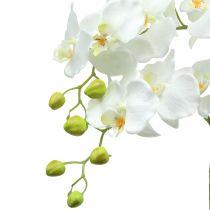 Orchidea biała na kuli ziemi 65cm