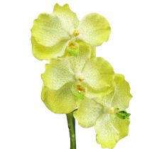 Orchidea z korzeniami jasnozielona L43cm