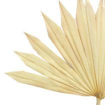 Palmspear Sun bielony 30szt.