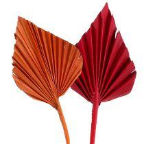 Włócznia palmowa asortyment czerwony/pomarańczowy 50szt.