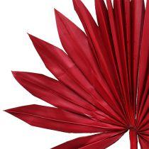 Włócznia Palmowa Słoneczna Czerwona 30szt