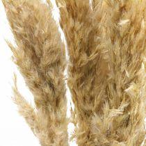 Trawa Pampasowa Sucha Deco Suszona Bielona 70-75cm 6 łodyg