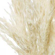 Trawa Pampasowa Suszona Bielona Sucha Deco 65-75cm 6szt w pęczku