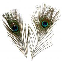 Pióra pawie 22cm - 30,5cm 12szt.