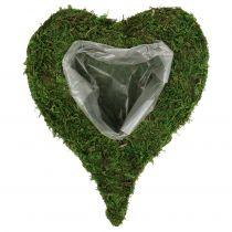 Roślina Serce Mech 28cm x 23cm