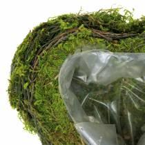 Roślina serce winorośli, mech 22cm x 20cm H7cm