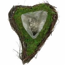 Serce rośliny pnącze, mech 26cm x 36m H9cm