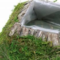 Poduszka roślinna mech, kora 20cm × 20cm