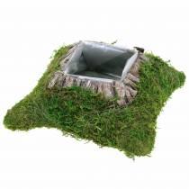 Poduszka roślinna mech, kora 25cm × 25cm