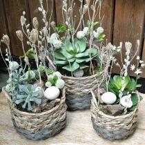 Kosz na rośliny, kosz wiklinowy do sadzenia, kosz na kwiaty okrągły natura, szary Ø29/23,5/18cm zestaw 3 szt.