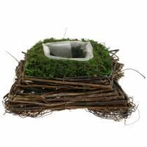 Poduszka roślinna rattan, mech 20cm x 20cm H8cm