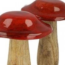 Grzyb Mango Wood Red, Nature Decoration Autumn Ø9cm H12cm 2szt.