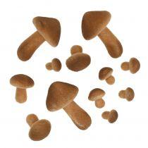 Pieczarki jasnobrązowe mix 2cm - 8cm 12szt.