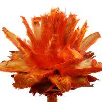 Plumosum 1 Pomarańcza 25szt.