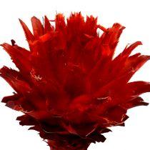 Plumosum 1 Red 25szt.