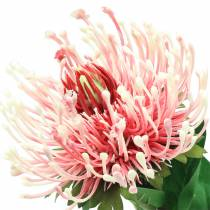 Protea sztuczna różowa 73cm